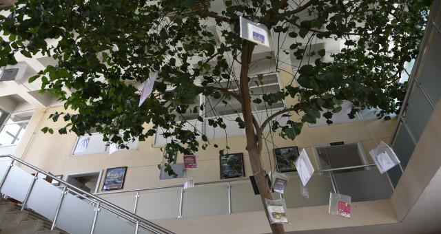 Limon ağaçlı kütüphane ilgi çekiyor