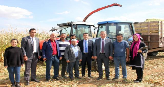Köse'de ilk kez ekilen silajlık mısırda hasat yapıldı