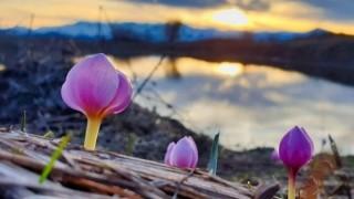 Bahar mevsimiyle birlikte çiçekler açmaya başladı