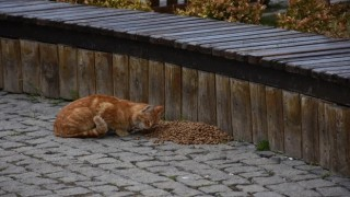 Gümüşhane Belediyesi Sokak Hayvanlarını Unutmuyor