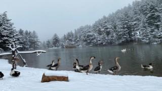 Gümüşhane'nin yüksek kesimlerine kar sürprizi