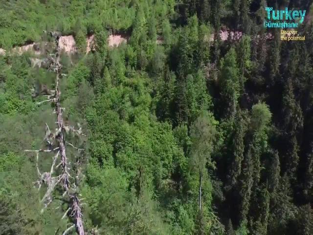Gümüşhane Örümcek Ormanları